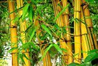 Cara membuat celengan sendiri dari bambu & kaleng bekas